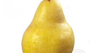 Everything You Need To Know About Pears